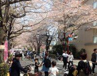 2018年4月1日かむろ坂の桜