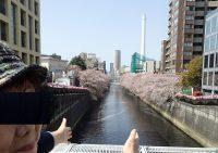2018年4月1日目黒川の桜